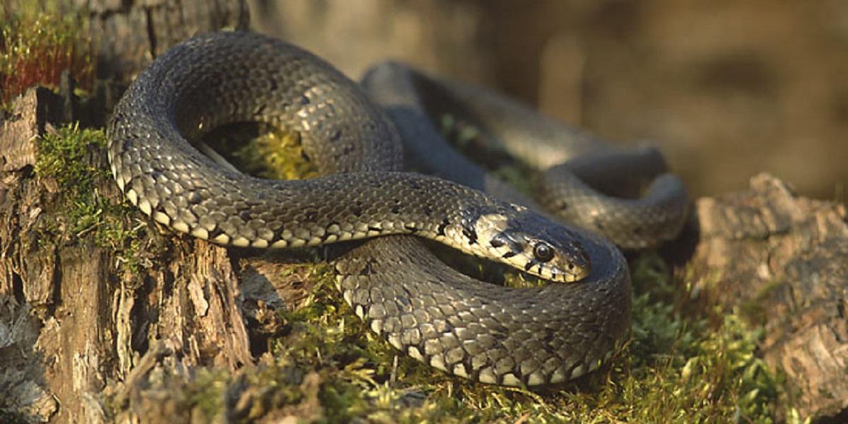 kiểm soát rắn